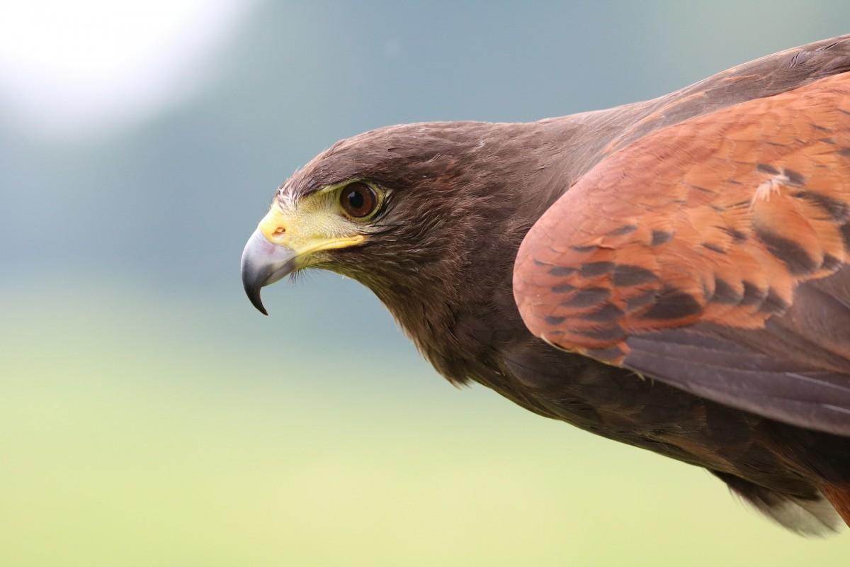 Falcon Ridge Bird of Prey Centre