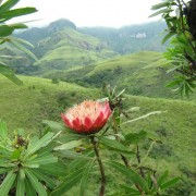 Royal Natal Nature Reserve