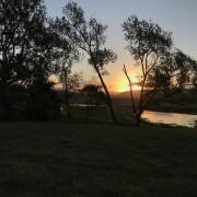 Chilled Oaks