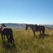 Ushaka Horse Trails