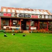 Negosie Museum